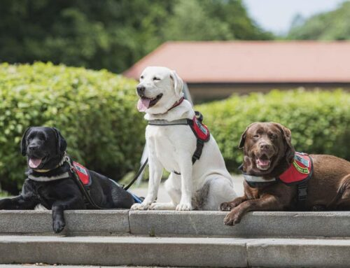 Pridobitev psa pomočnika za funkcionalne prikrajšane osebe (multifunkcijski psi pomočniki)