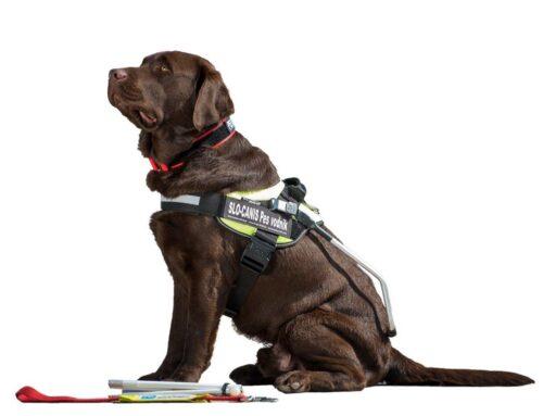 Pridobitev psa vodnika za slepo ali slabovidno osebo